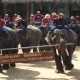 MAESA ELEPHANT CAMP with elephant shows, orchid farm and The Tiger Kingdom(half day)