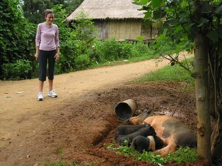 Chiang Mai Jungle Tour