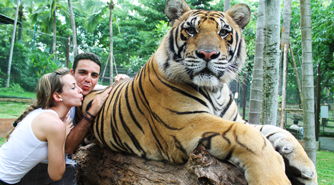 Image result for chiang mai tours